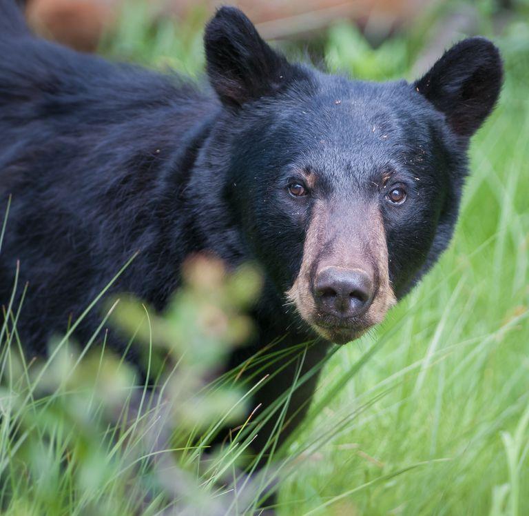 Bear se invita a una sesión de jacuzzi y unos sorbos de margarita