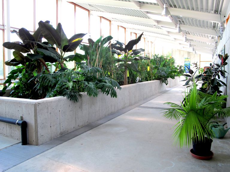 Eco machine inside the OCSL showing a row of plants