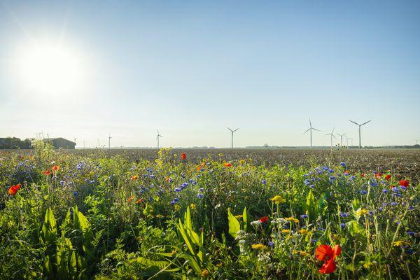 wildflowers and wind turbines