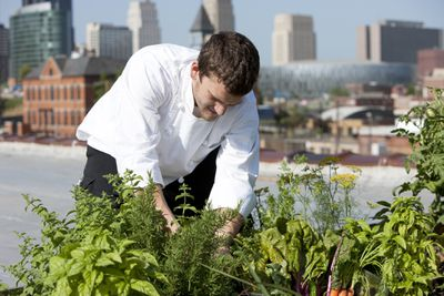 A chef harvests fresh vegetables on a rooftop.
