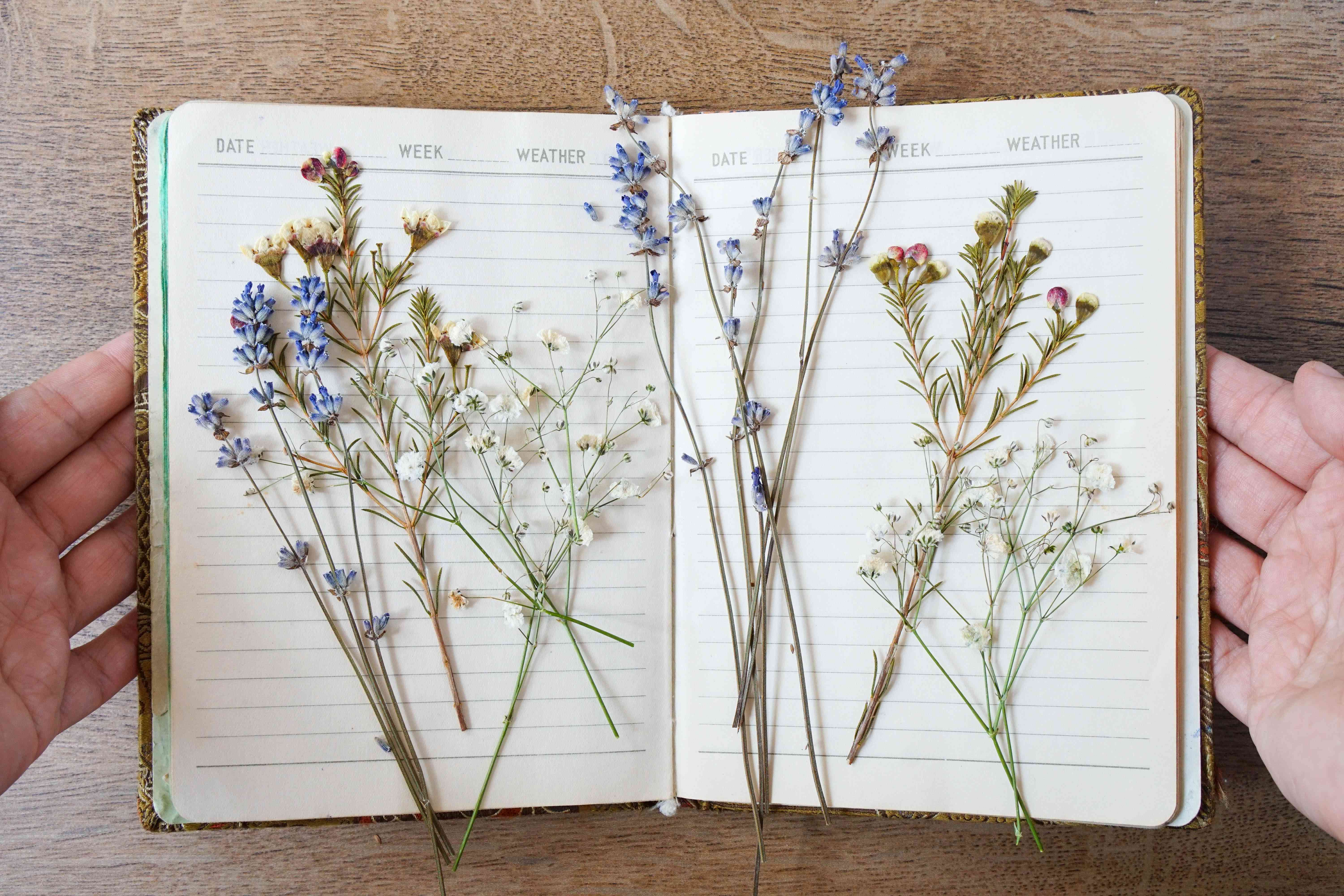 hand opens up day planner filled with dried pressed wildflowers