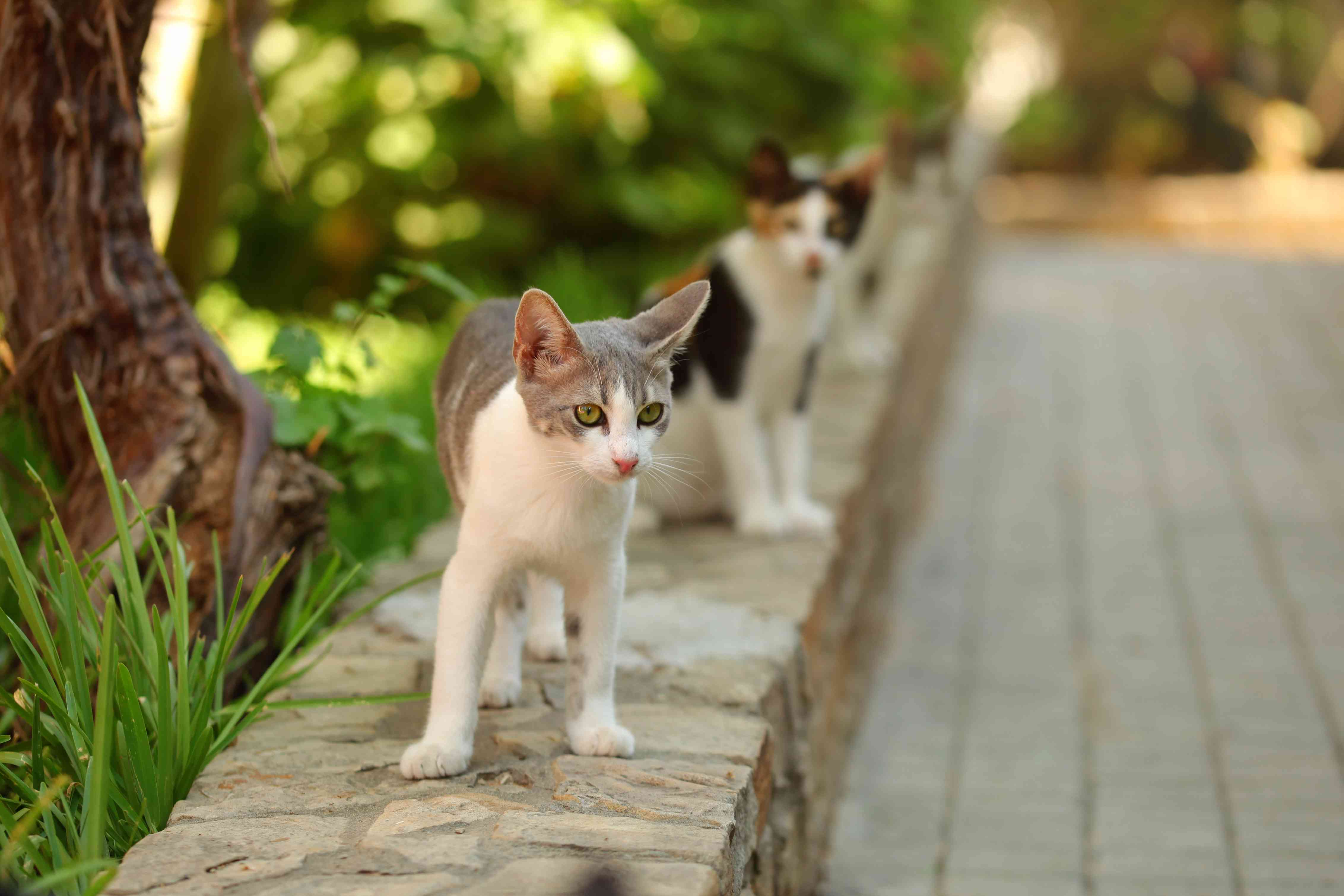 cats on wall