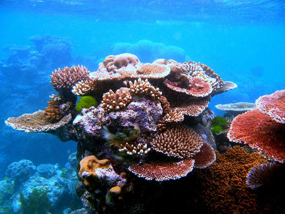 A variety of colorful corals.