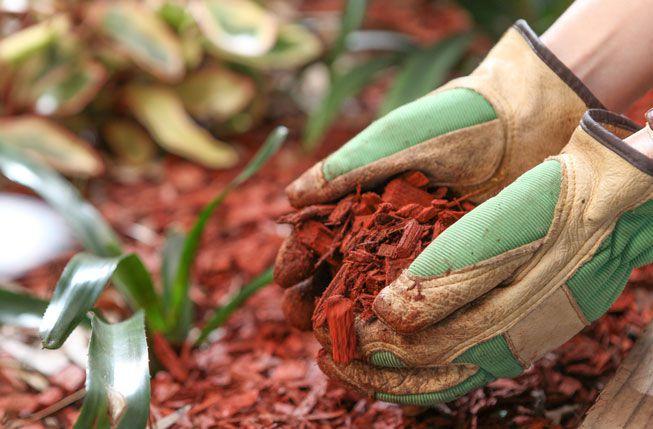 A person wearing gardening gloves applies mulch to a garden bed