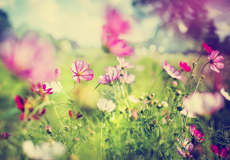 8 pasos hacia la jardinería