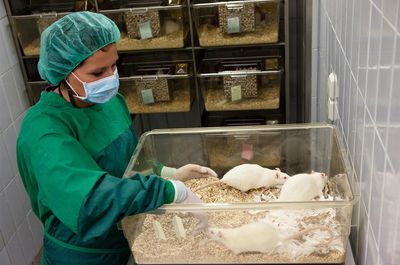young female lab assistant takes care about laboratory rats into plastic cages