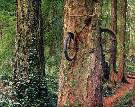 tree grows over a bike photo
