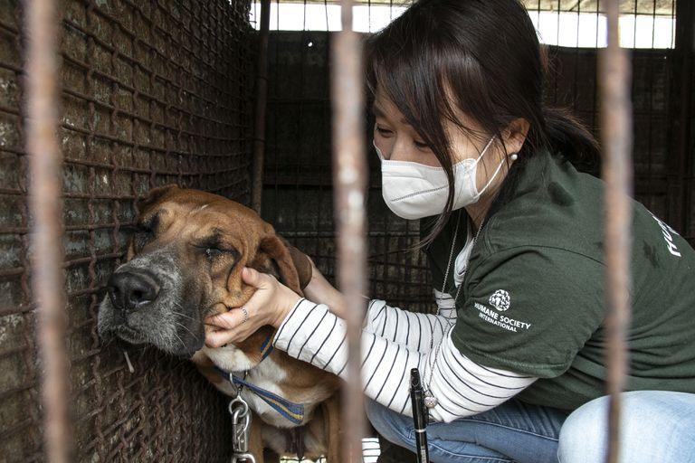 Nara Kim of HSI Korea comforts a dog in Yongin, South Korea,