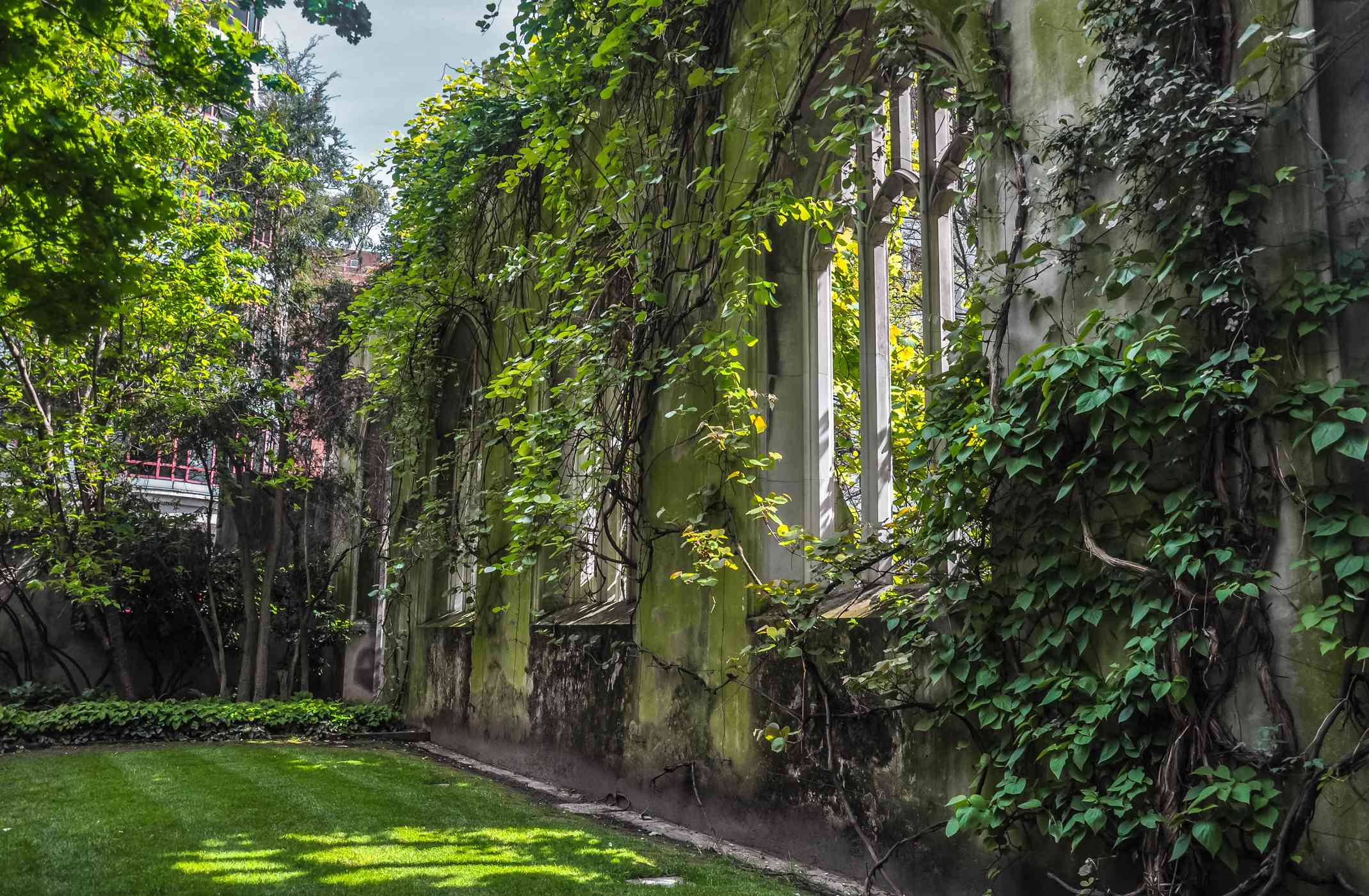 the ruins of St Dunstan-in-the-East Church covered in green plants and vines and a green lawn