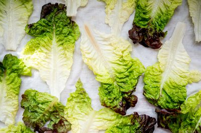 freshly washed individual red leaf lettuce leaves dry on white towel