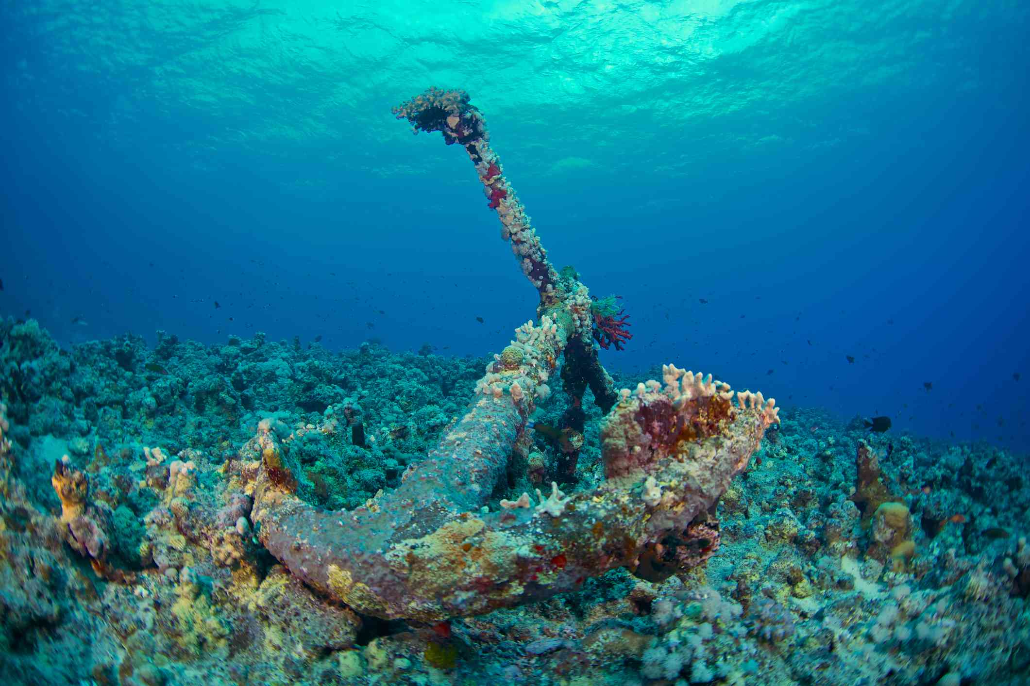 Coral reef attached to a sunken anchor