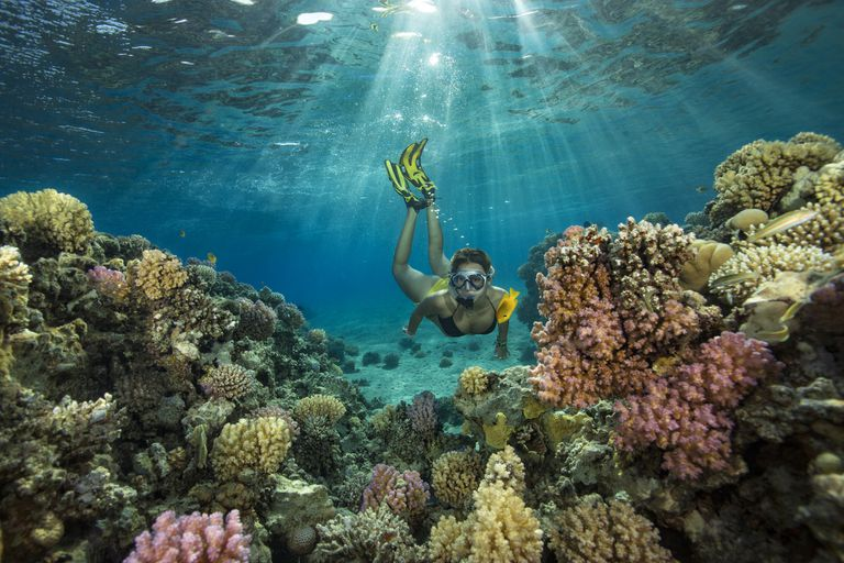 diver in coral reefs