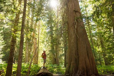 A man hiking in an old growth forest full of sunlight.