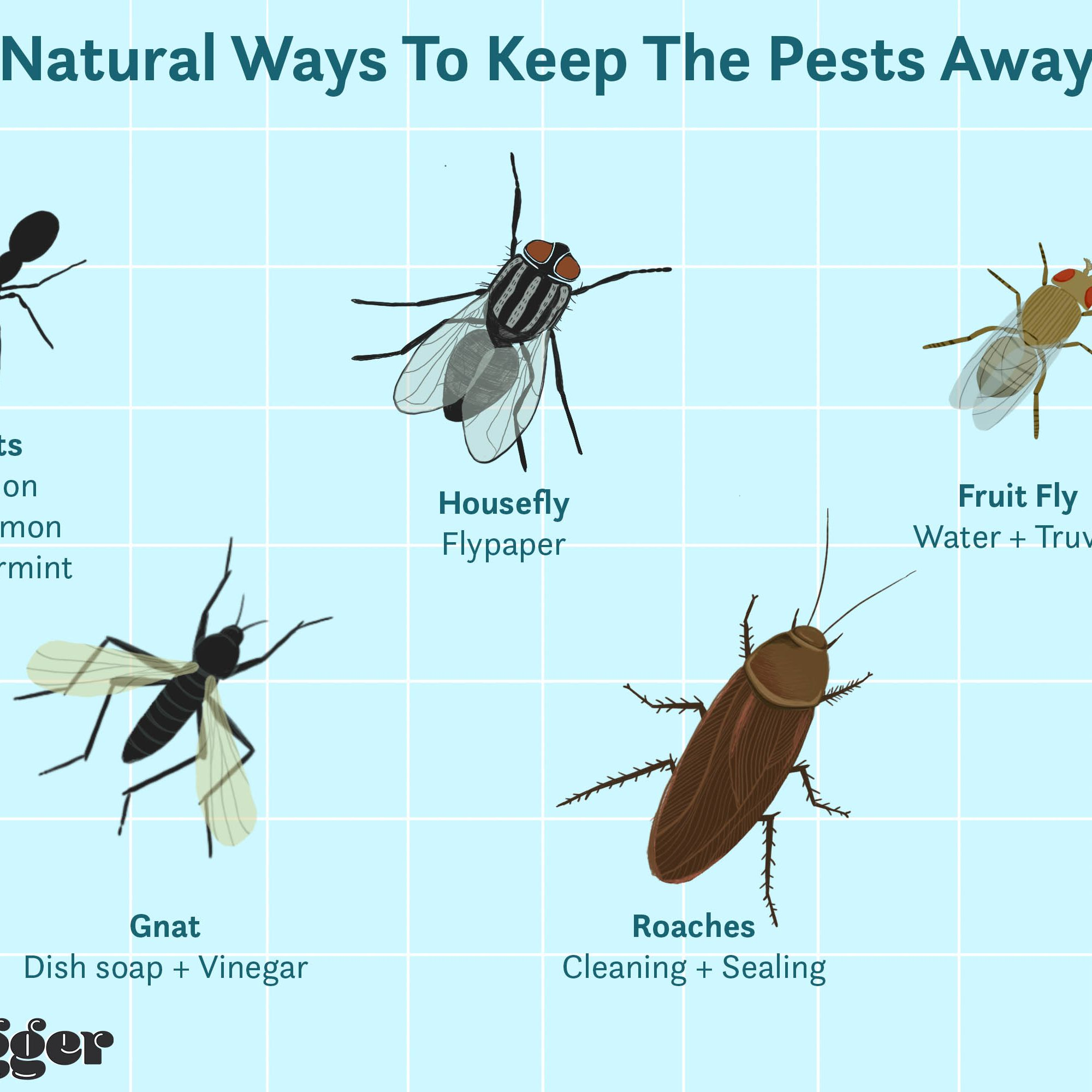 Natural Ways To Get Rid Of Insects In Your Home