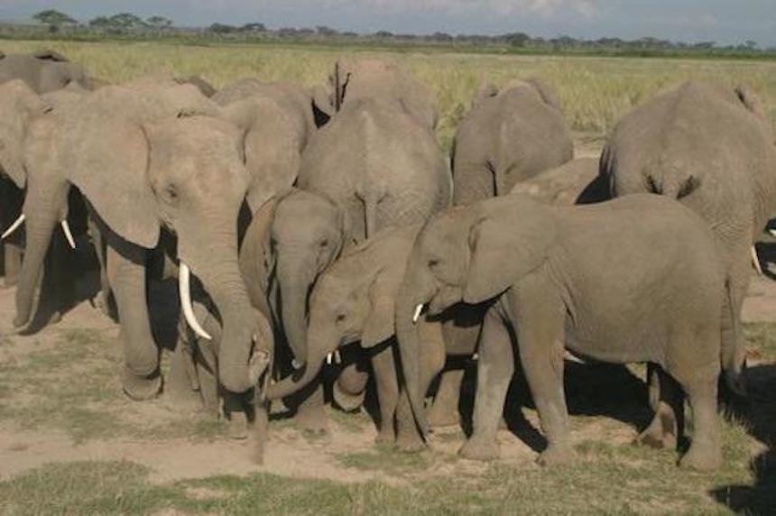 elephant caress