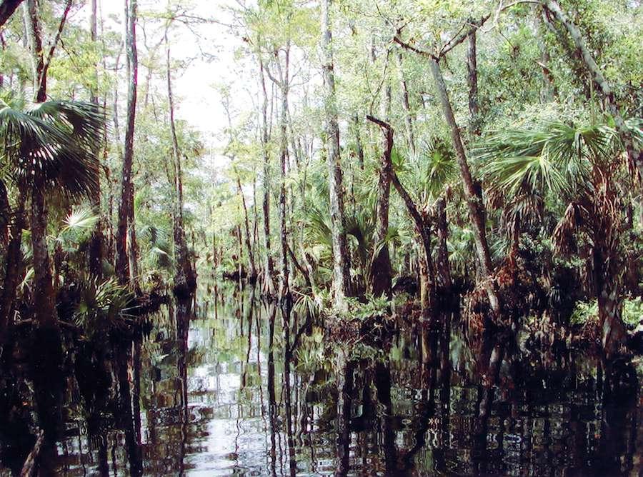Telegraph Swamp, Punta Gorda, Florida