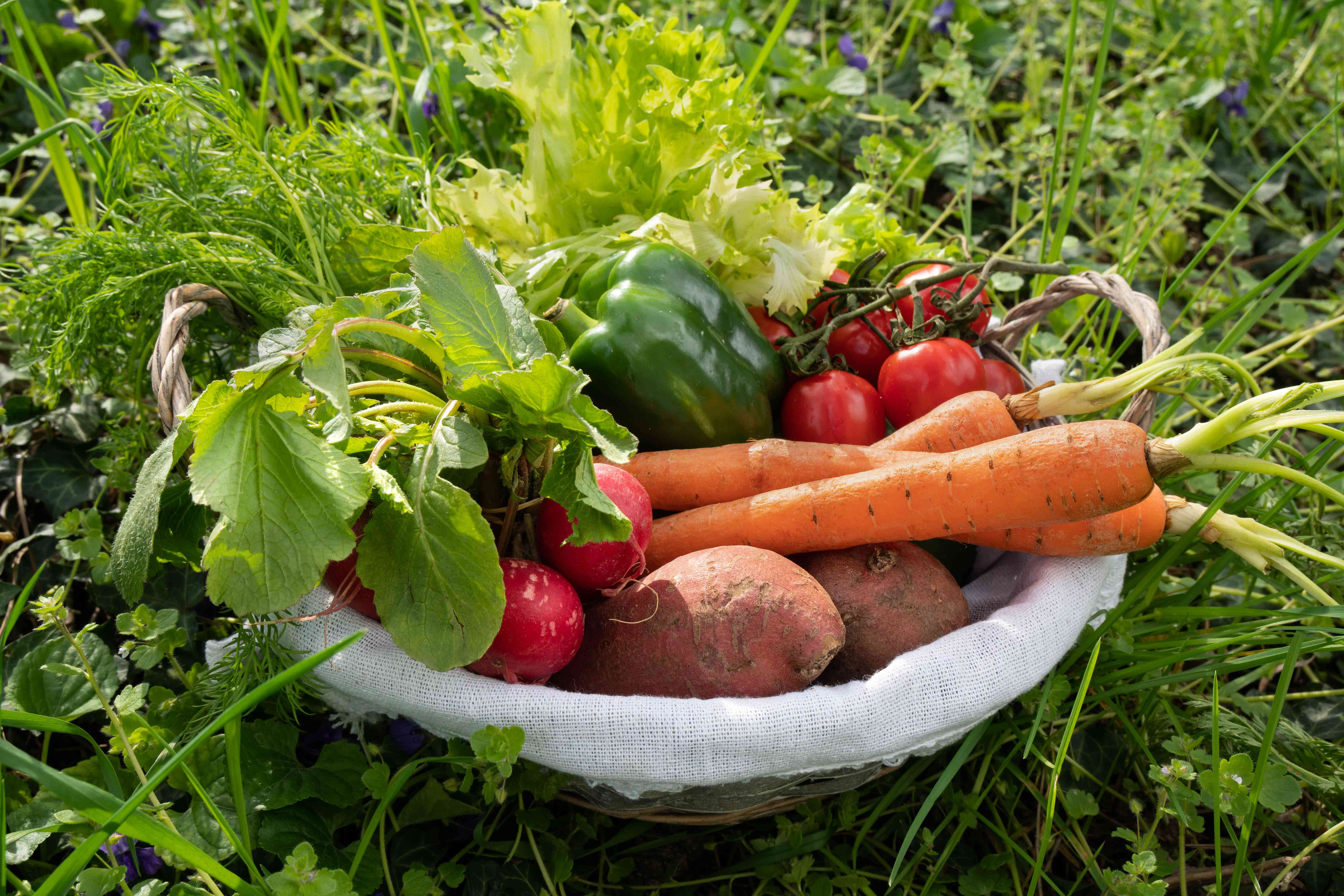 a basket in grass overflowing with fresh vegetables like carrots sweet potatoes and tomatoes