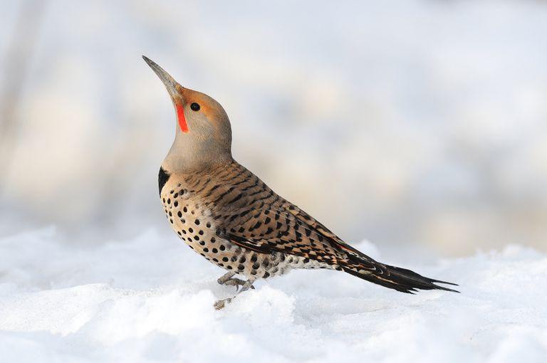 5 consejos para la observación de aves en invierno