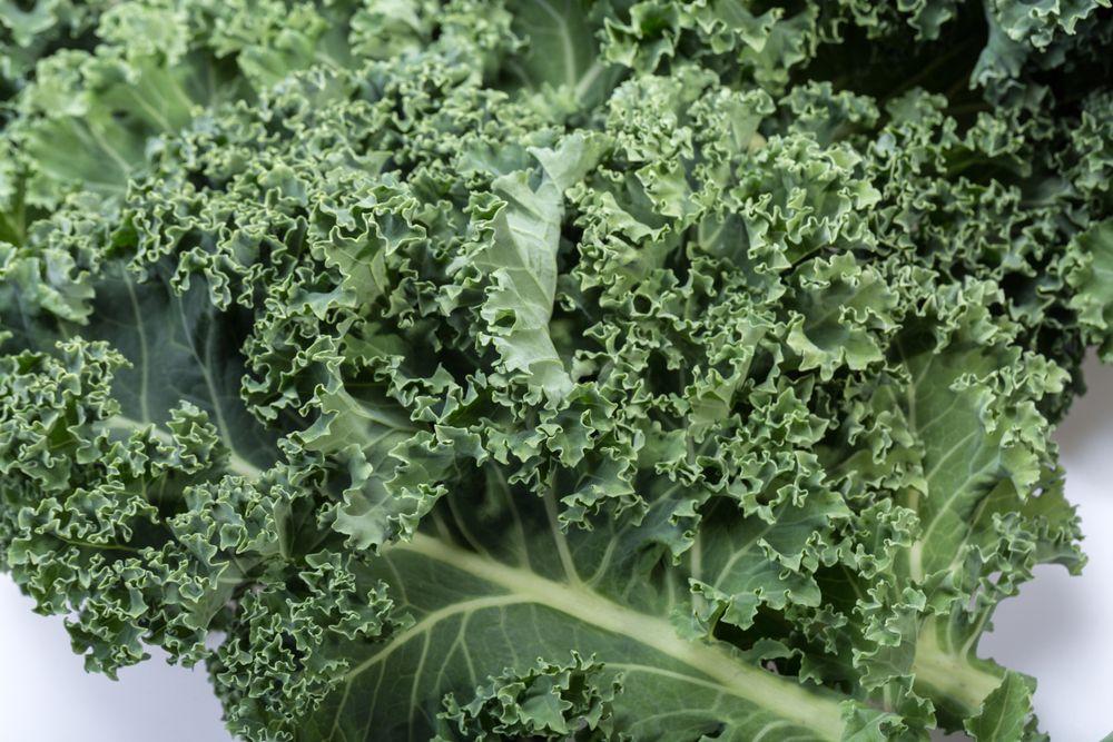 bunch of fresh curly leaf kale