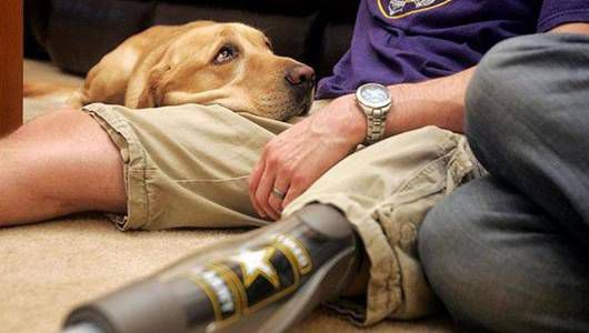 La nueva política del ejército dificulta que los soldados obtengan perros de servicio