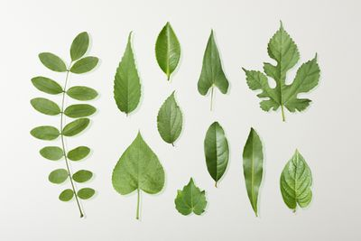 Tree leaf collection
