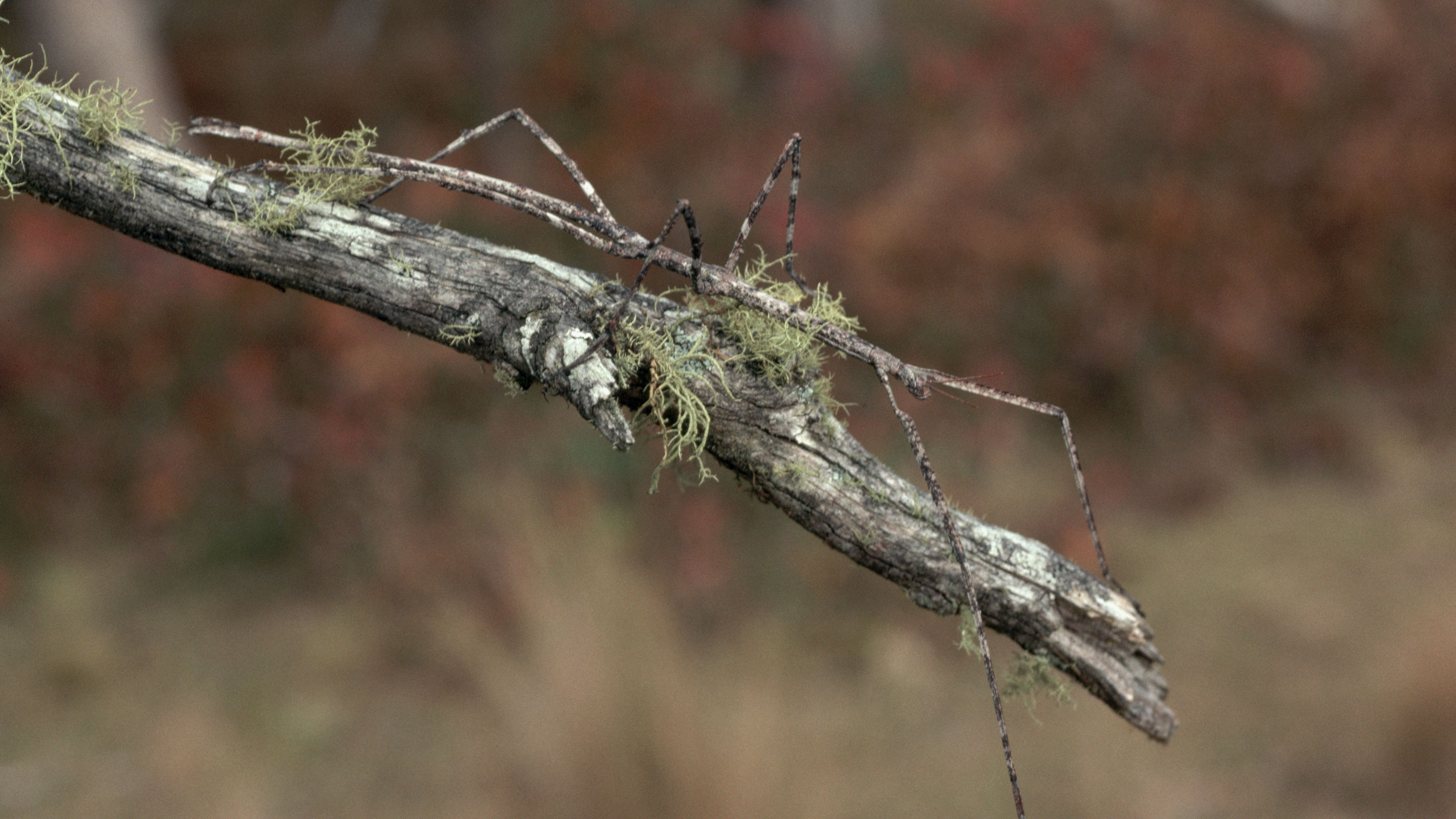 11 Amazing Examples of Insect Camouflage