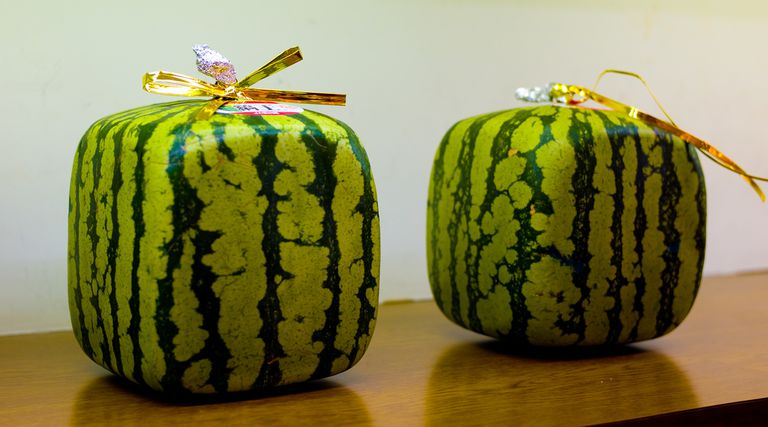 Japanese farmers grow square watermelon because they're easier to store in small refrigerators and easier to ship in boxes.