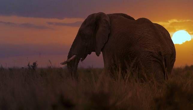 Los elefantes valen 76 veces más vivos que muertos