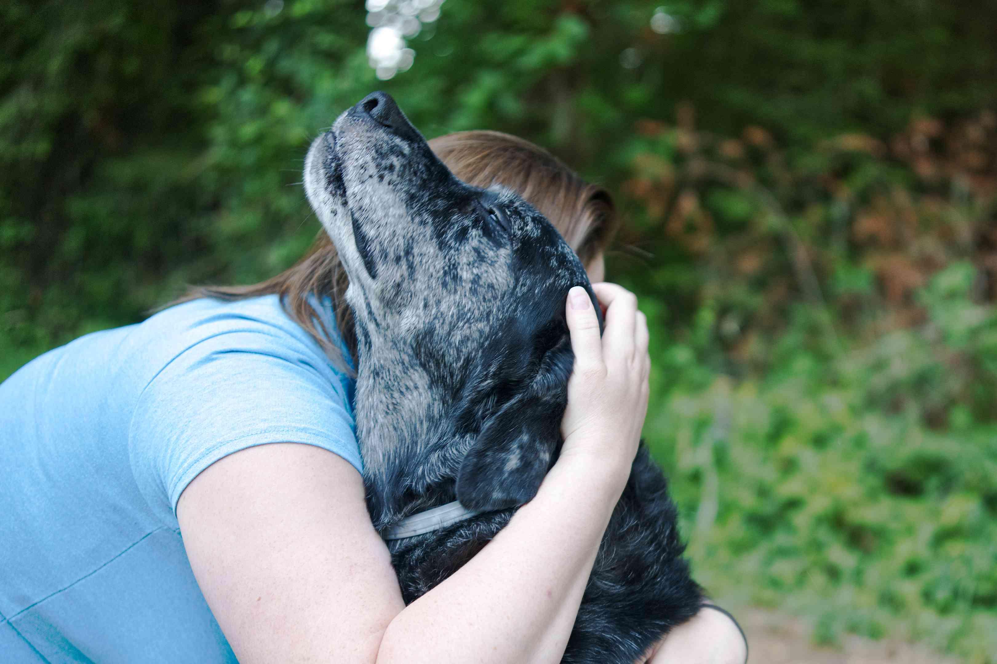 woman in blue shirt hugs older black dog outside while dog closes eyes