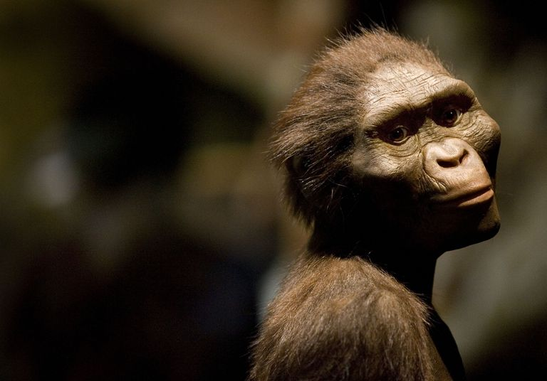 A sculpture of Lucy the australopithecine