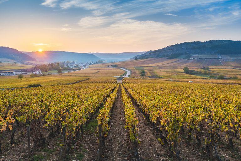 France, Bourgogne-Franche-Comte, Burgundy, Cote-d'Or, Cote de Beaune vineyards.