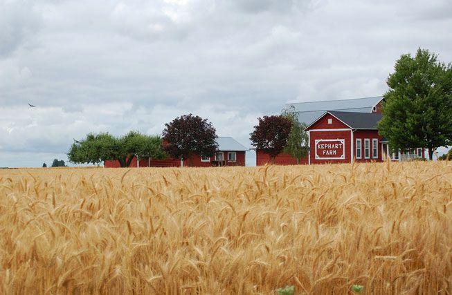 A wheat farm in Oregon