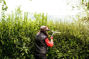 woman pruning a hedge