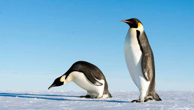 Giant 6-Foot-8 Penguin Discovered in Antarctica