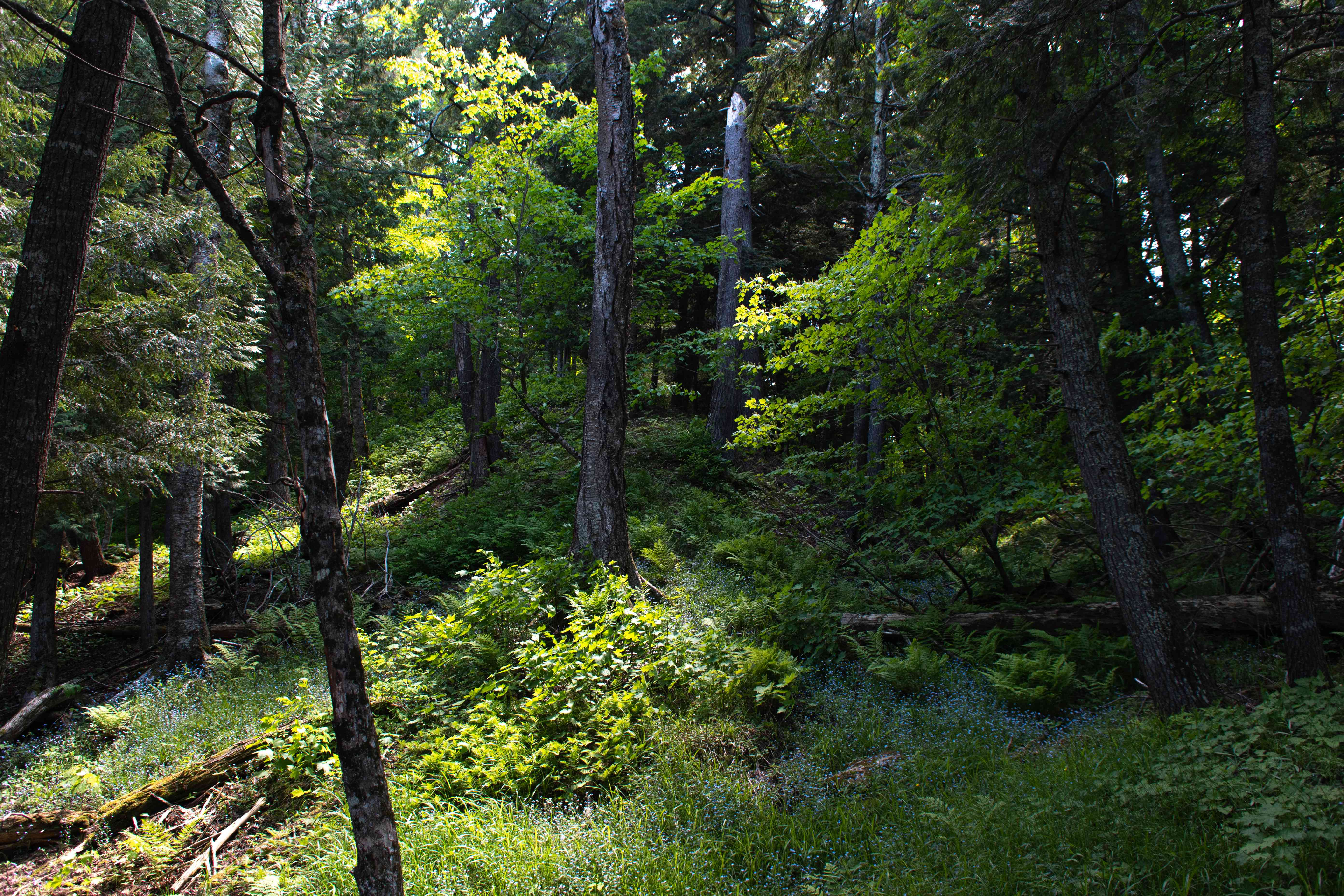 forest with dappled sunlight