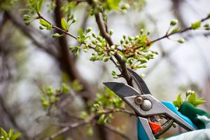 clippers pruning brushes