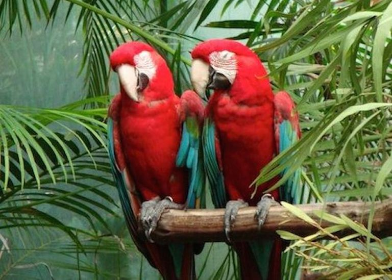 parrots talking photo