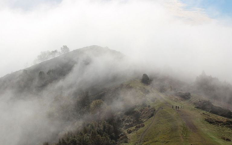 Arpas de niebla podrían arrebatar agua a las nubes