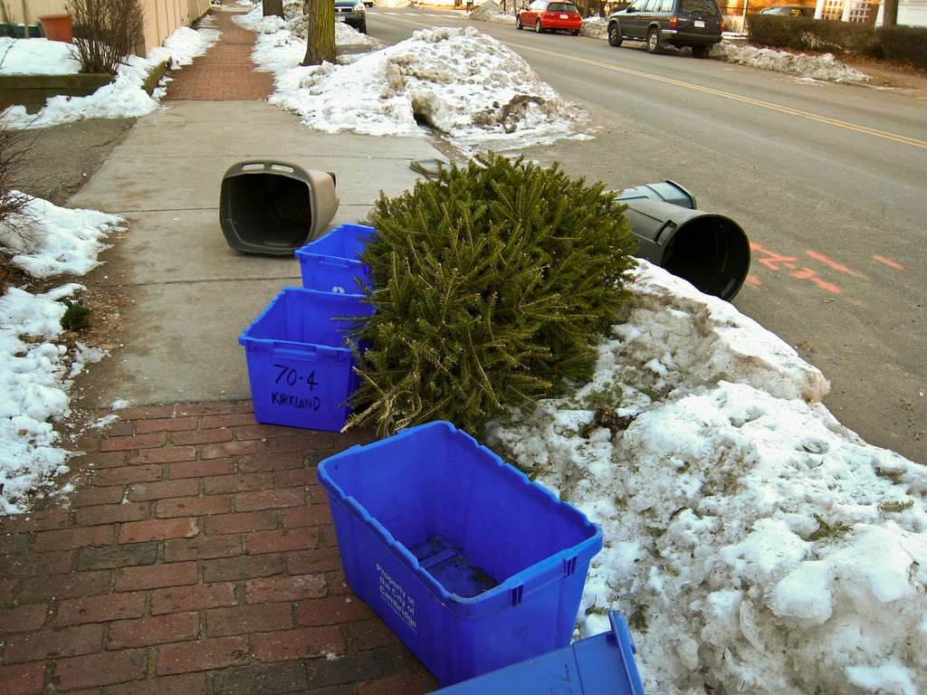 Christmas tree on the curb