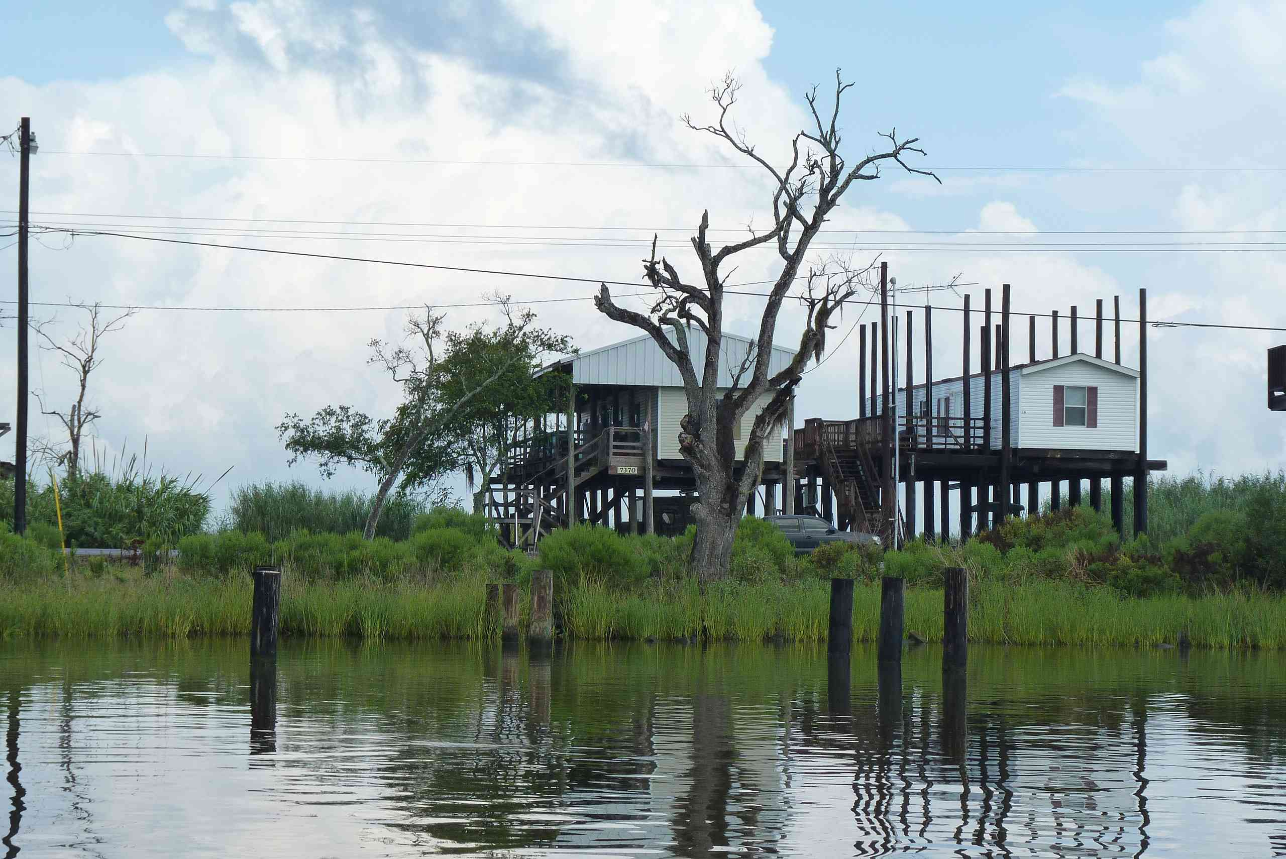 Lone ghost tree and houses on stilts next to water