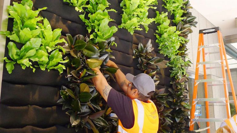 A worker installing plants into wall pockets