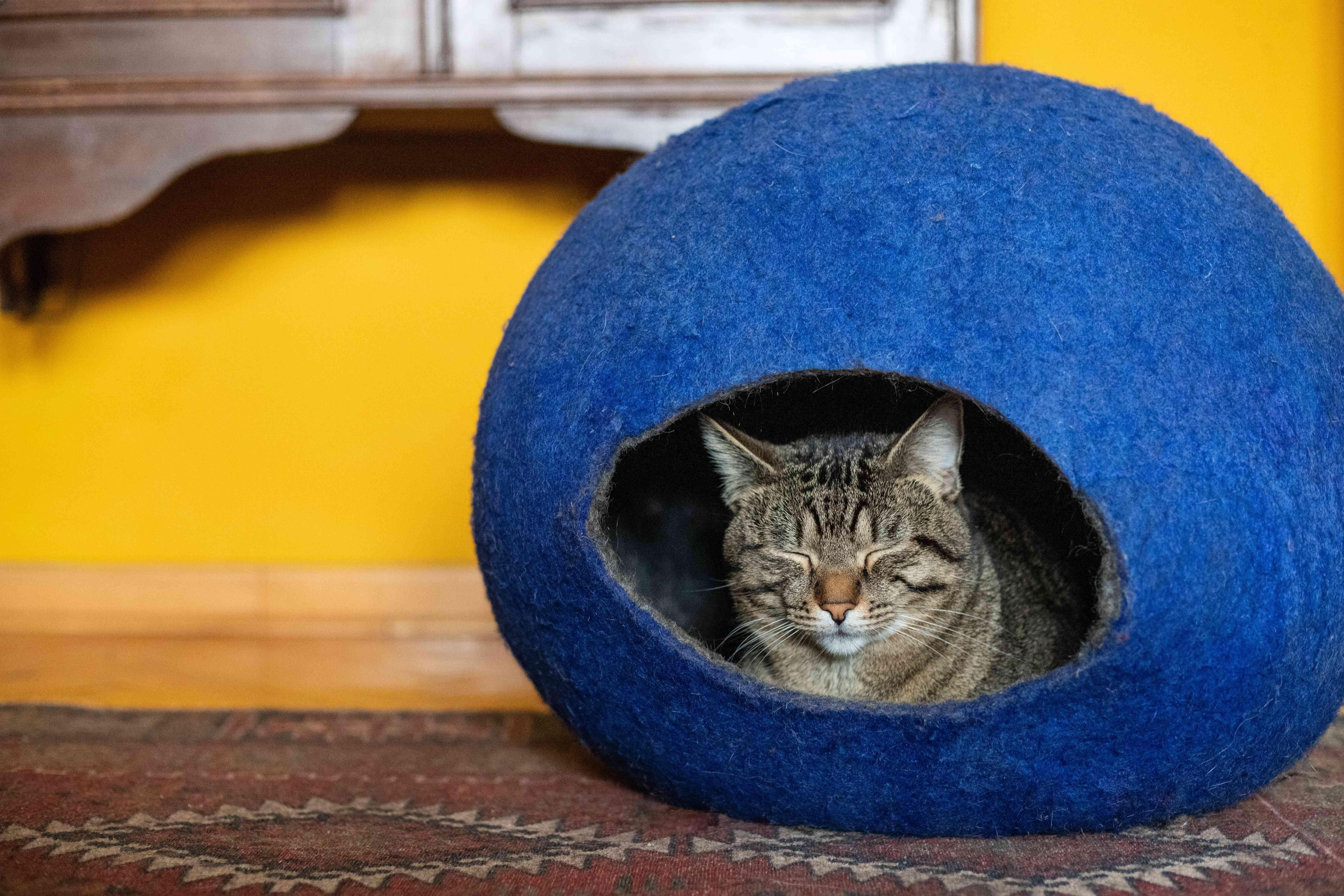 striped kitty sits cozy in blue felt globe house