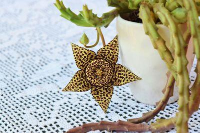 Toad cactus flower