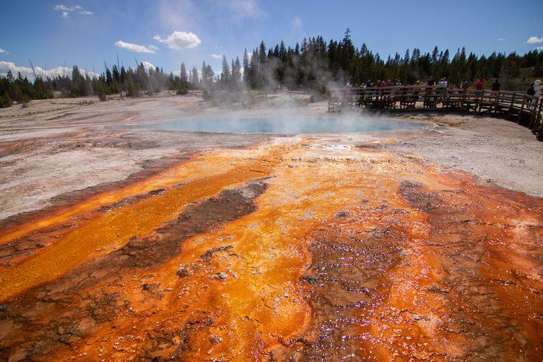 Microorganisms in a super-heated hot spring