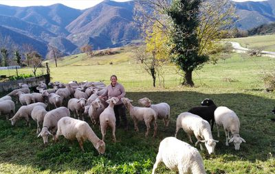 A woman in the hills with sheep.