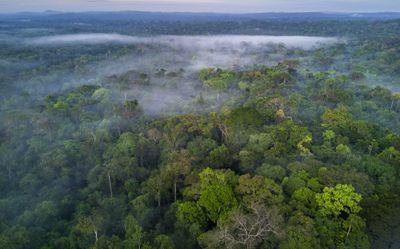 The Amazon rainforest in Brazil