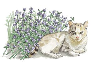 Illustration of cat next to catnip plant.