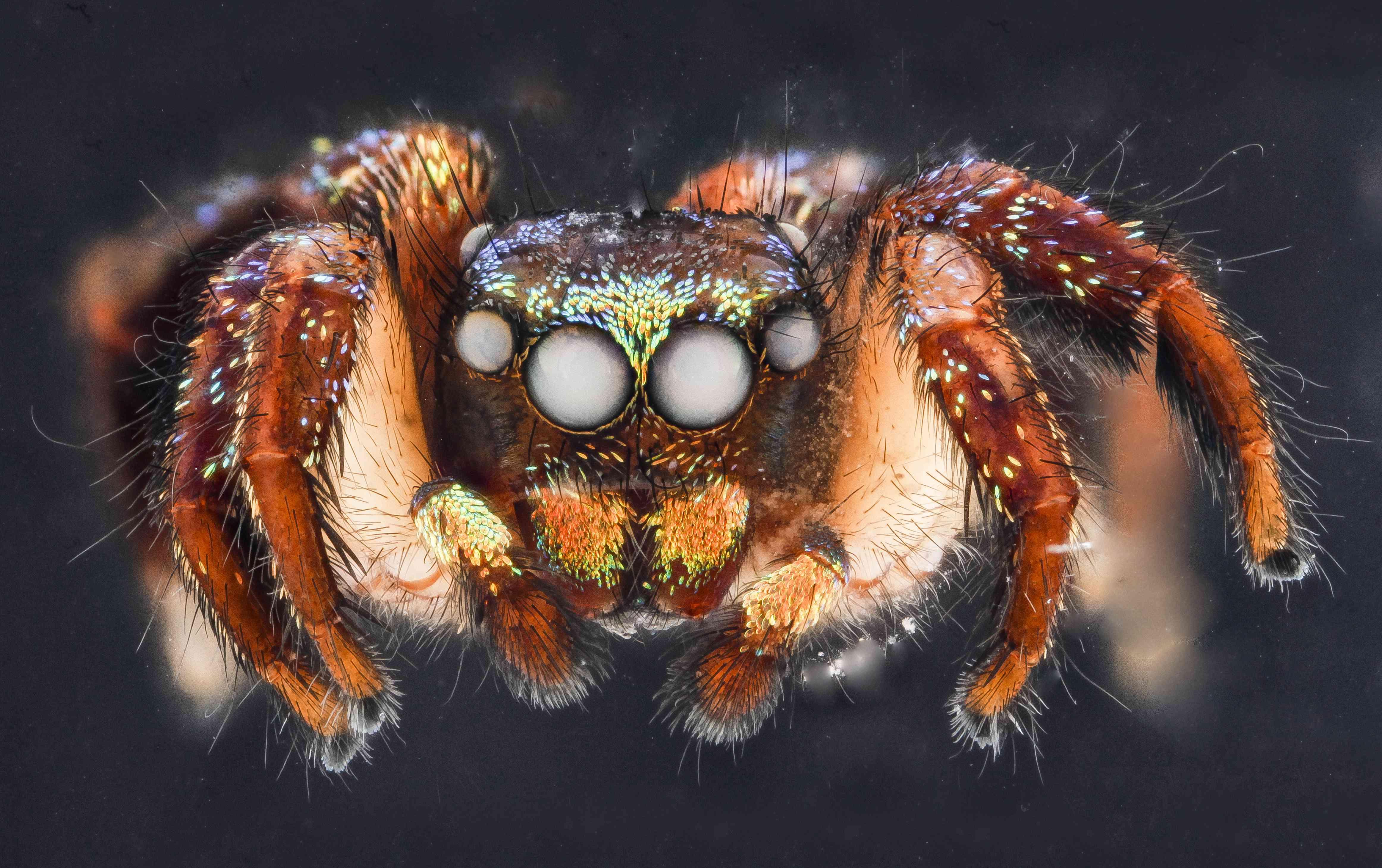 Christmas lights spider