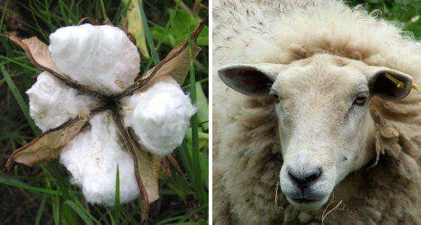 cotton-vs-wool-fabric-choice.jpg