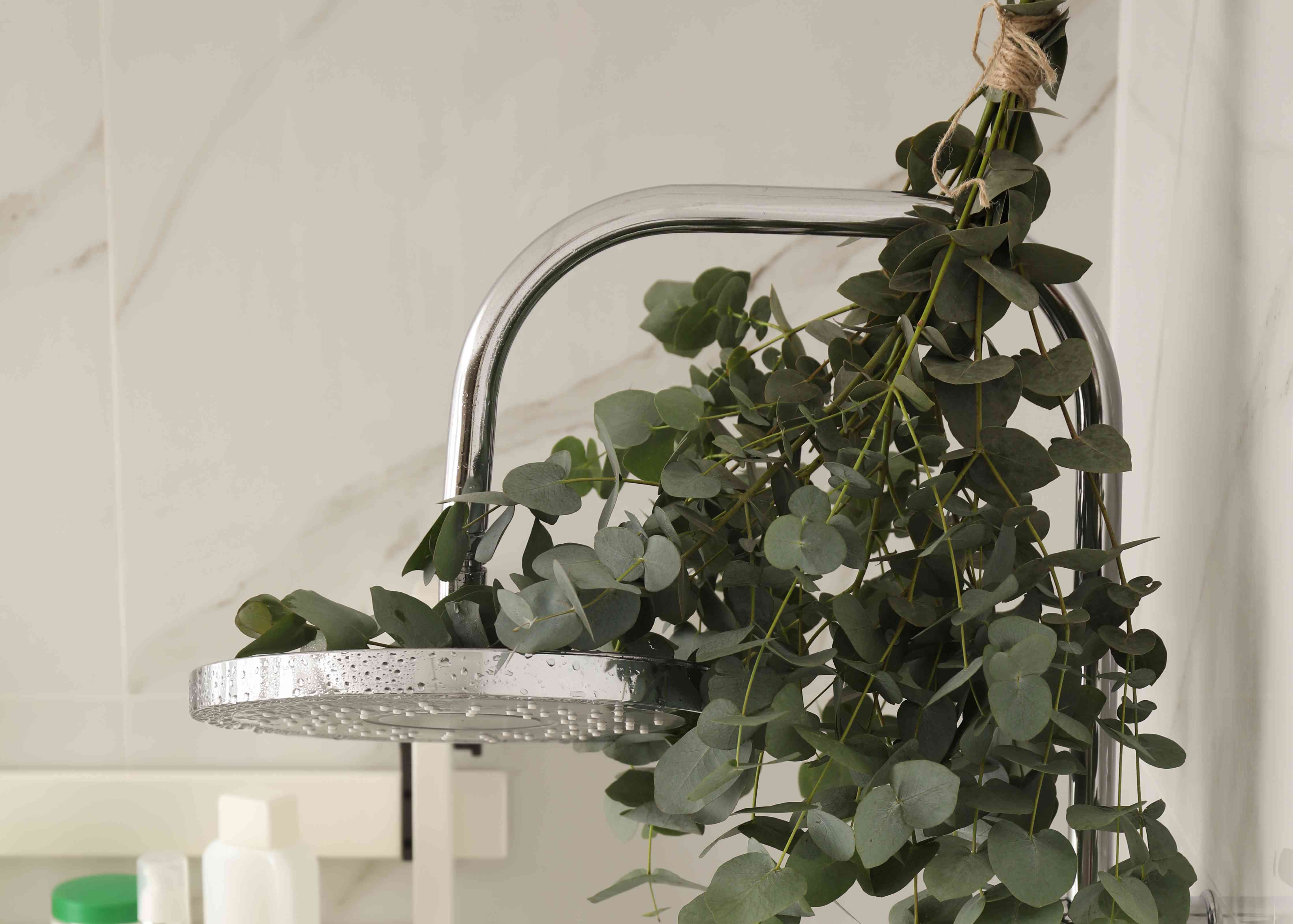 Branches with green eucalyptus leaves in shower